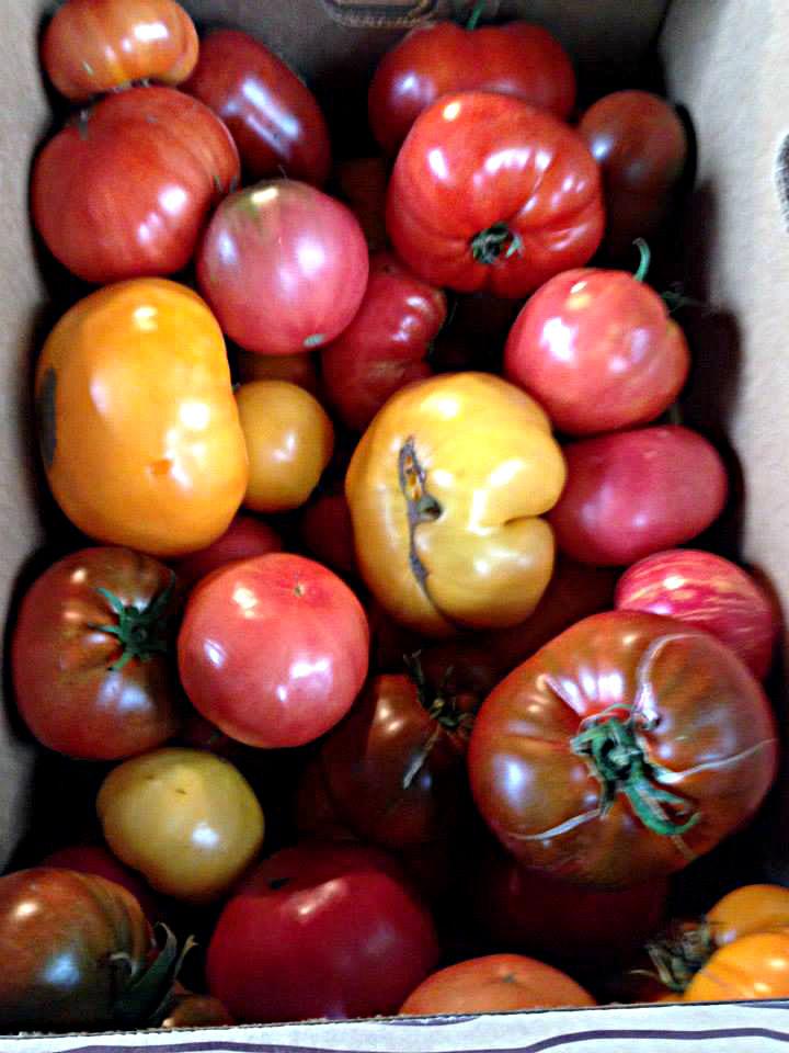 no2 tomatoes